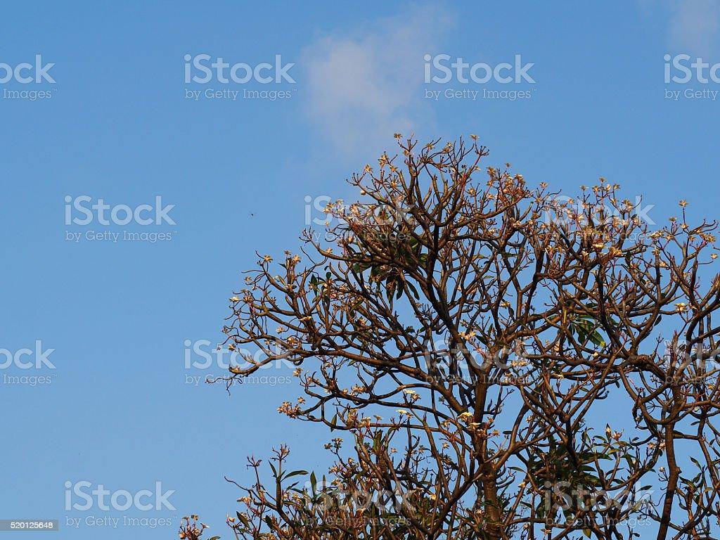 Tree and Blue Sky stock photo