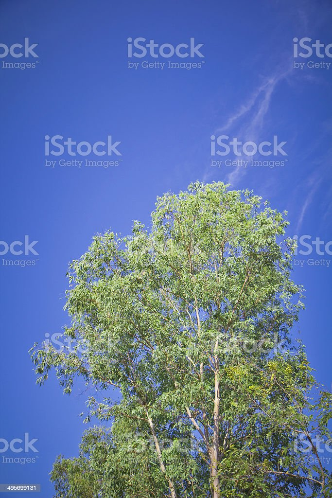 tree and blue sky with cloud royalty-free stock photo