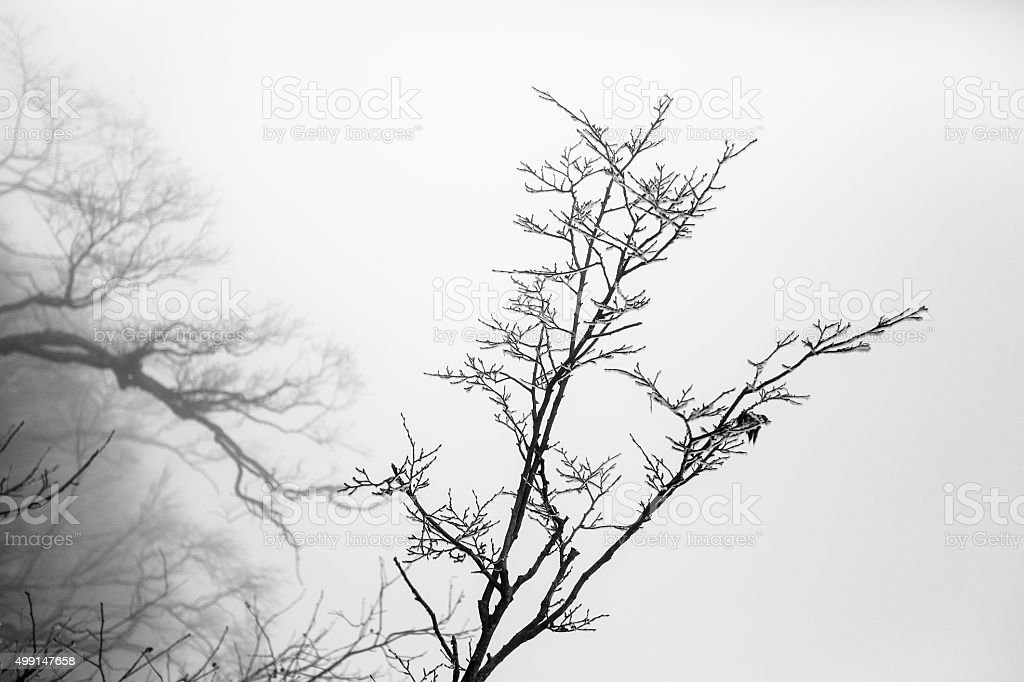 Tree and branch stock photo