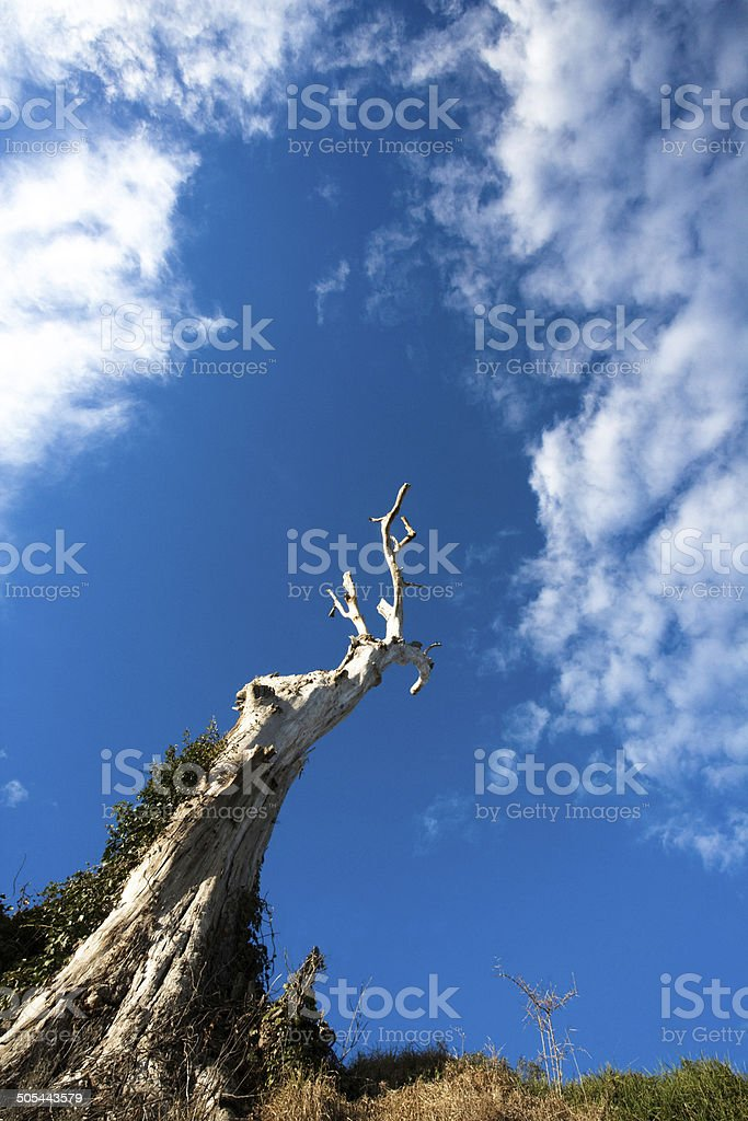 Tree and clouds stock photo