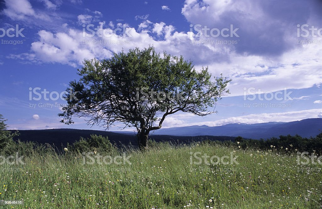 Tree and clouds royalty-free stock photo