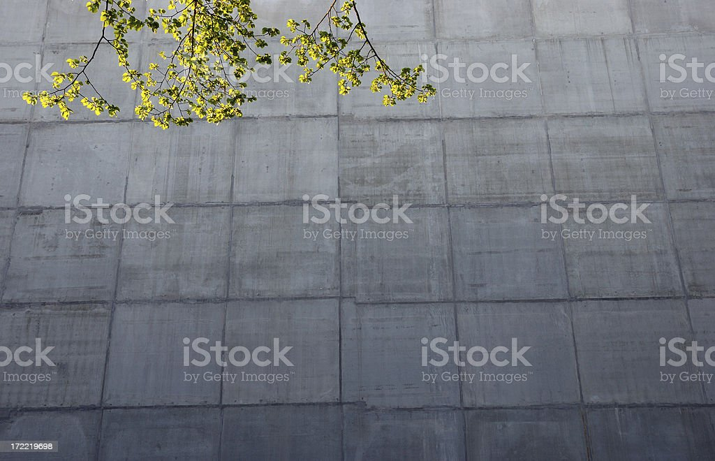 tree and concrete royalty-free stock photo
