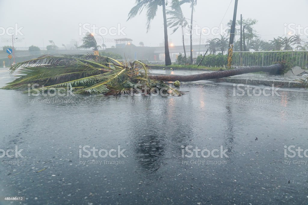 Tree and debri in road during typhoon stock photo
