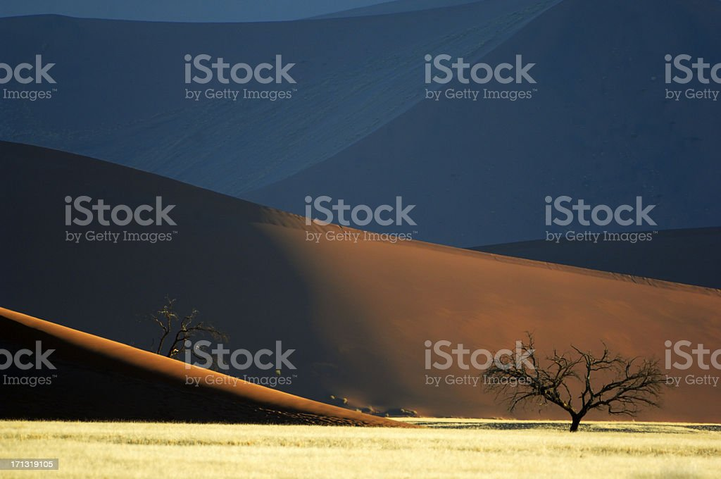 Tree and dunes stock photo