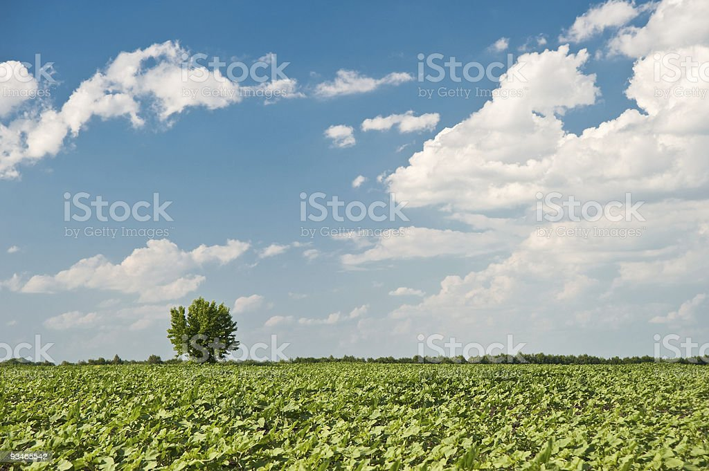 Tree and field royalty-free stock photo