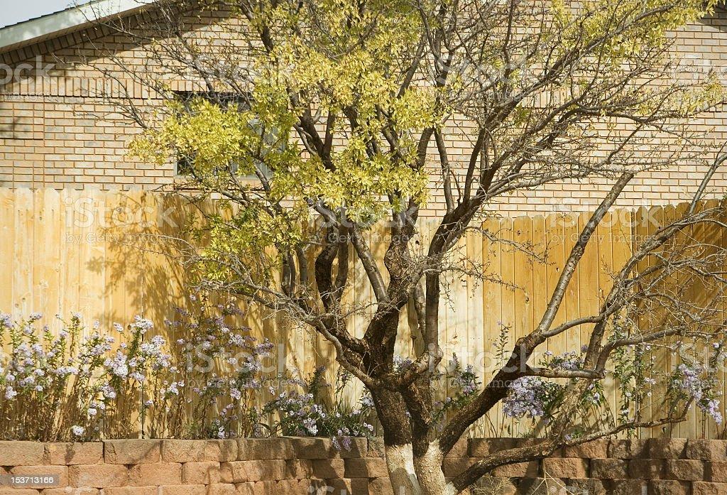 Tree and Flower Garden stock photo