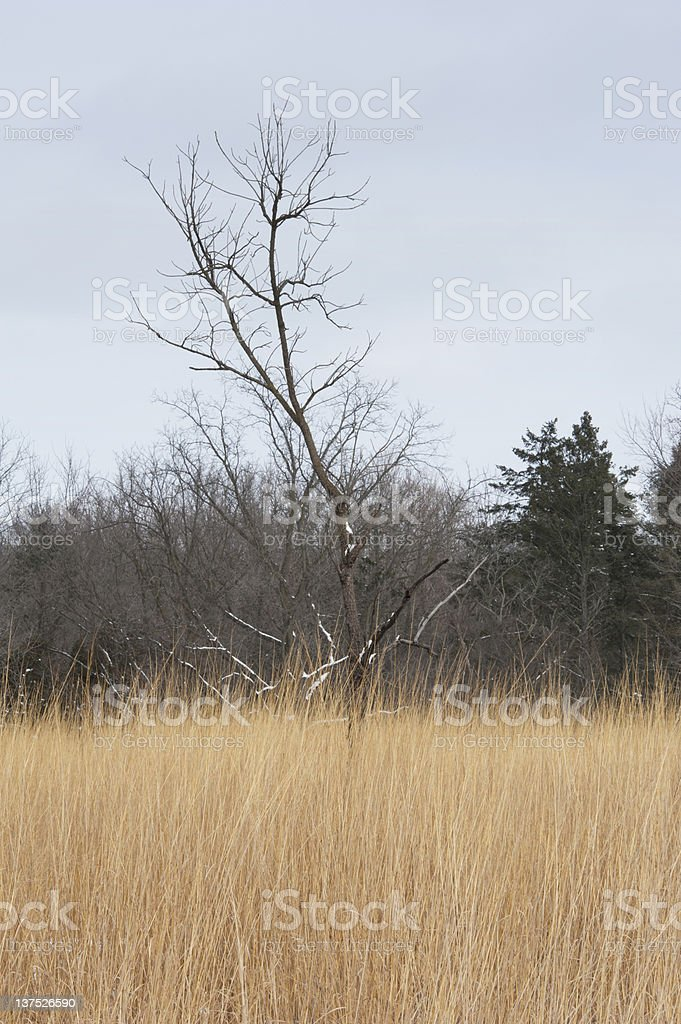 Tree and Grass in the Winter stock photo