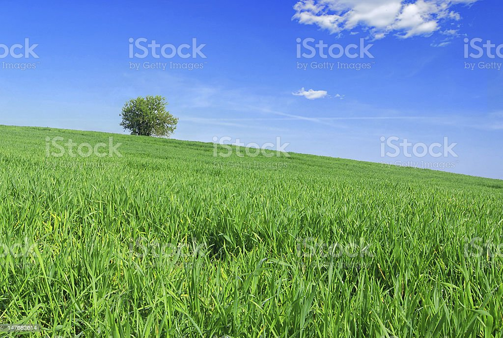 Tree and grass royalty-free stock photo