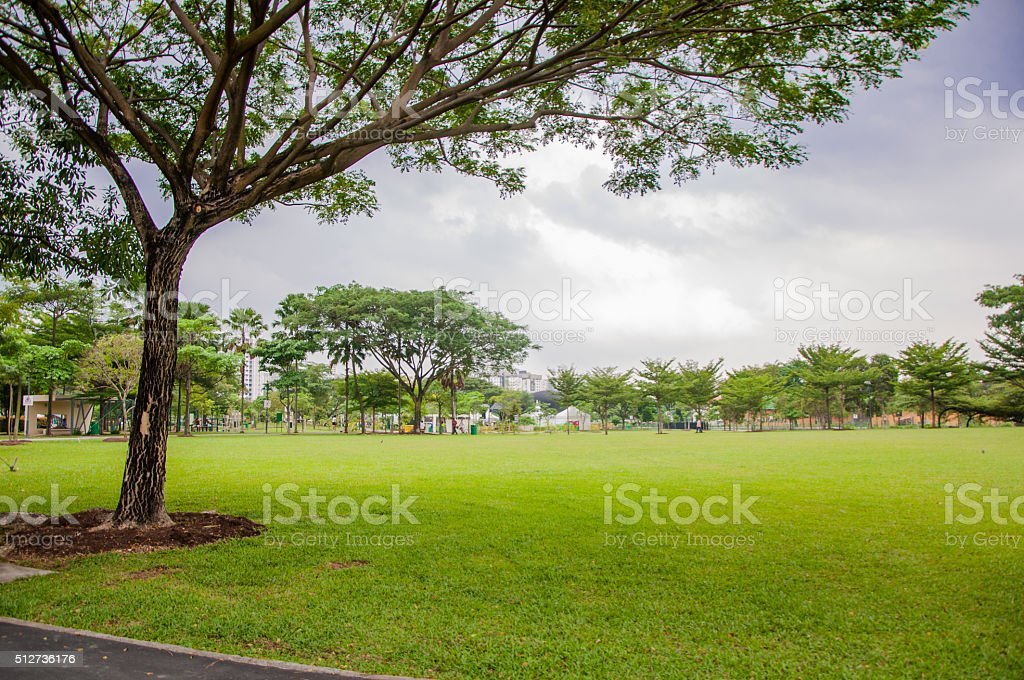 tree and green field in park stock photo