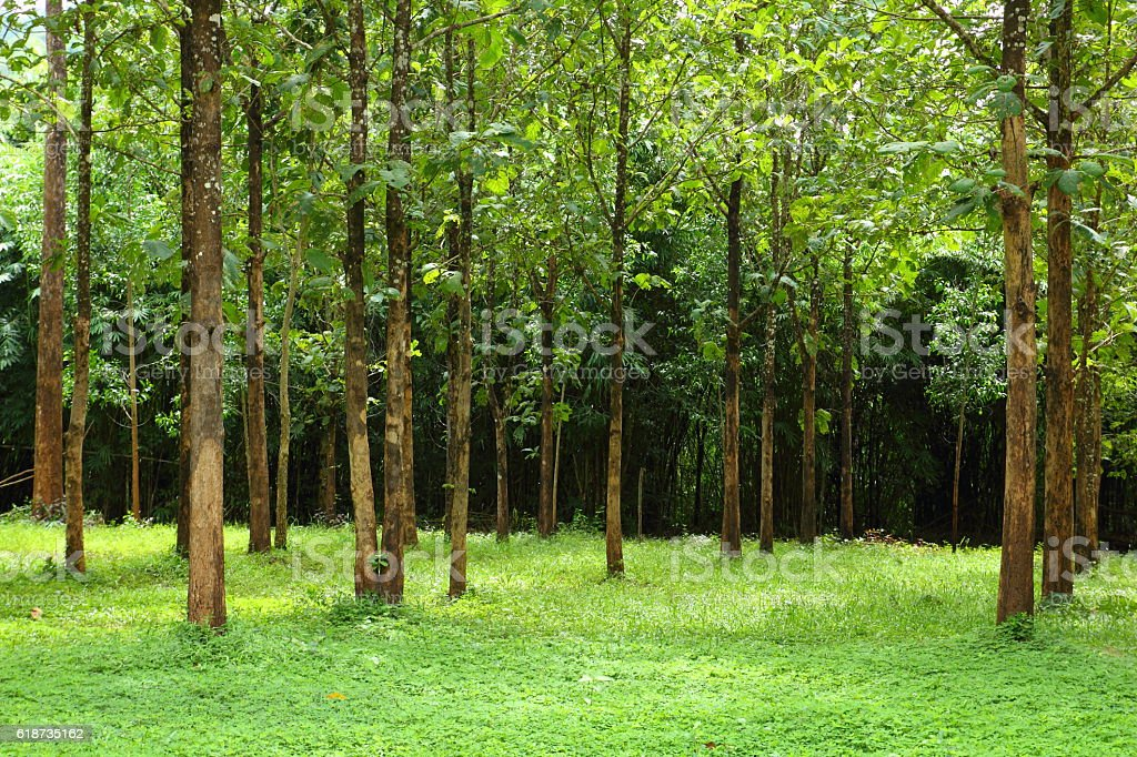 Tree and green grass stock photo