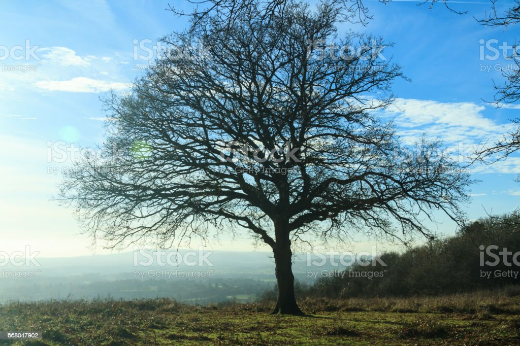 Tree and hazy sunshine stock photo