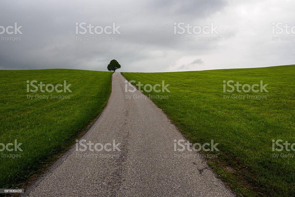 Tree and horizon stock photo