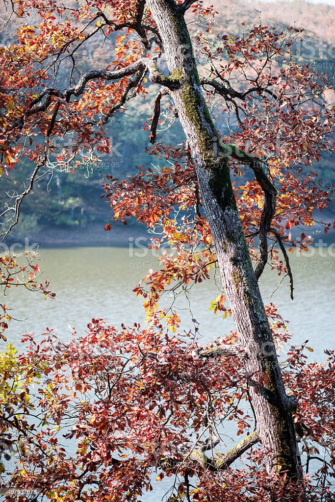 Tree and lake in Autumn stock photo