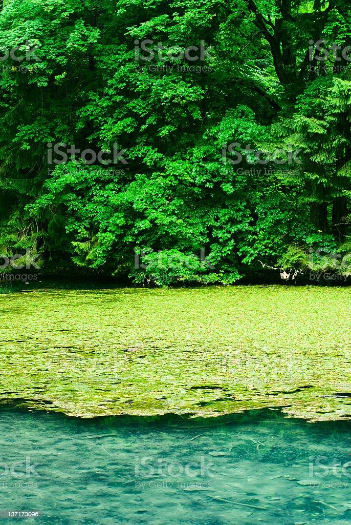 tree and lake royalty-free stock photo