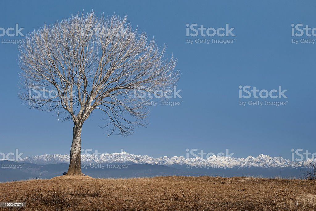 Tree and landscape royalty-free stock photo