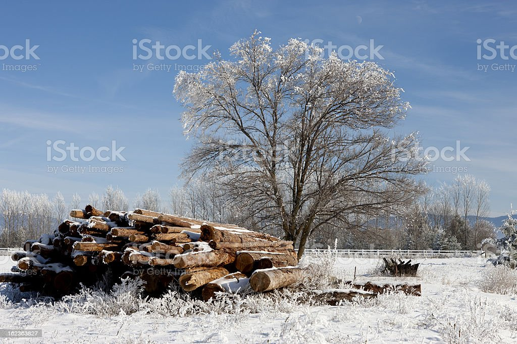 Tree and logs in winter. royalty-free stock photo
