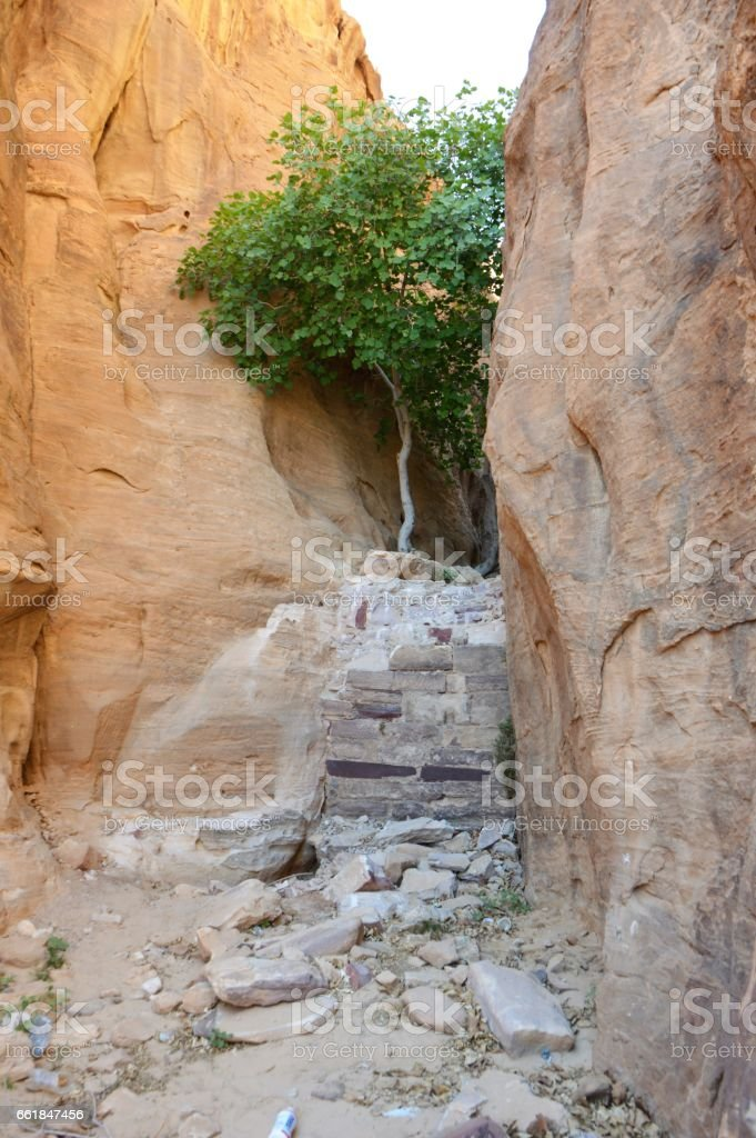 Tree And Man-made Dam In Wadi Rum stock photo