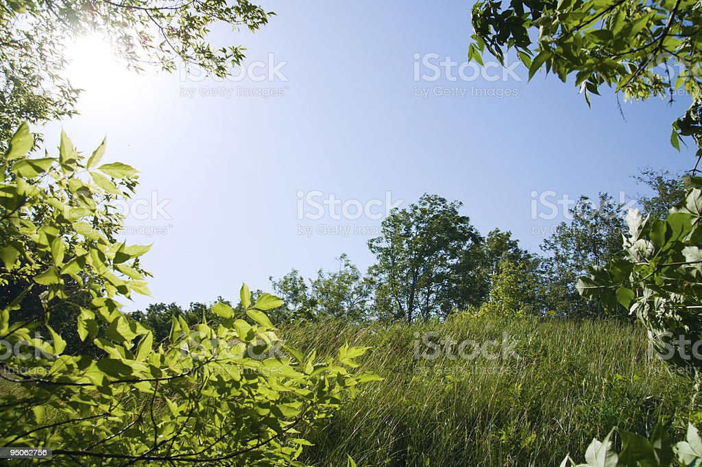 tree and meadow royalty-free stock photo