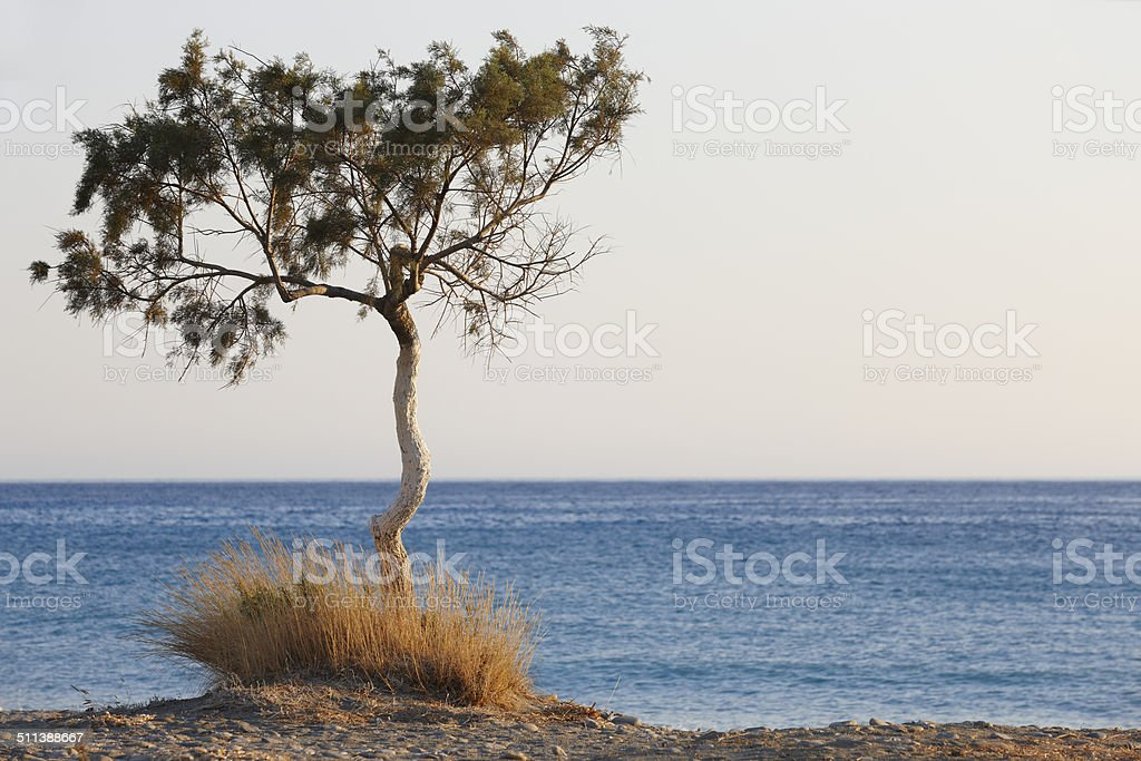 Tree and Mediterranean sea at sunset in Plakias. Crete. Greece stock photo