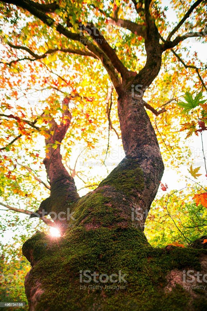Tree and moss stock photo