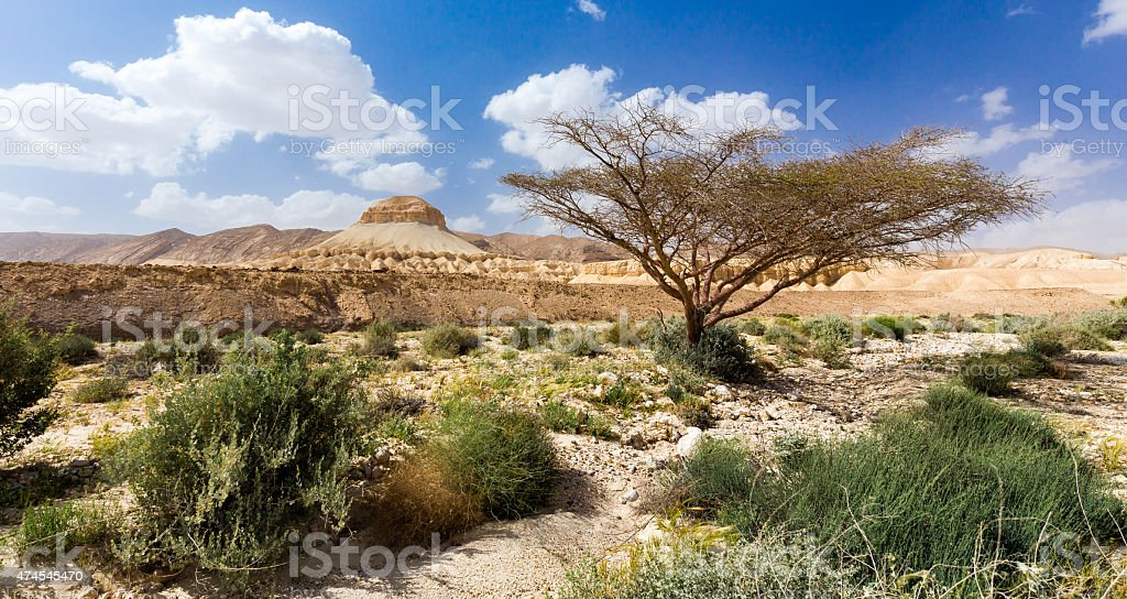 Tree and mountain in desert. stock photo