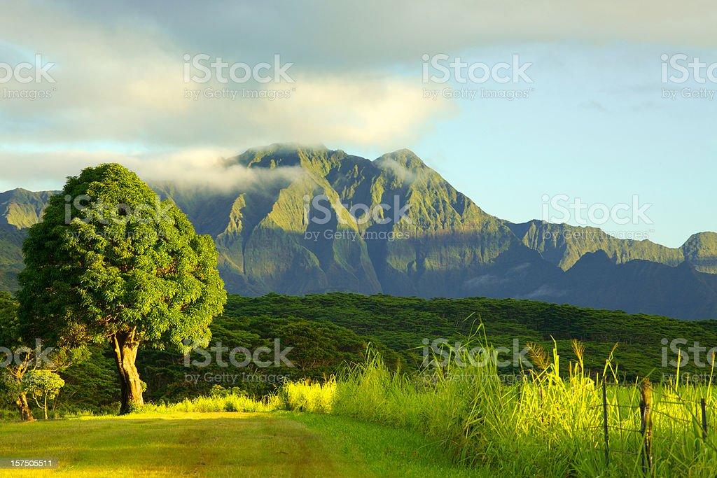 Tree and Mountain royalty-free stock photo