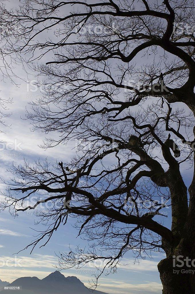 Tree and Mountain Silhouette stock photo