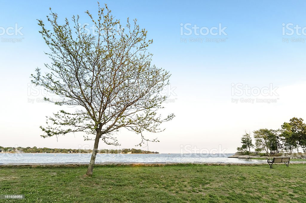 Tree and Ocean royalty-free stock photo