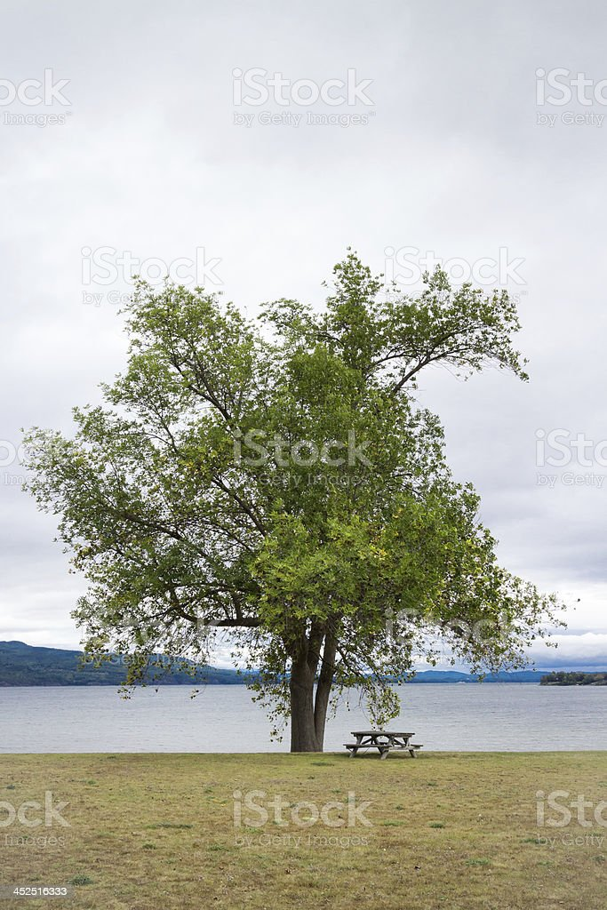 Tree and Picnic Table at Lake Champlain stock photo