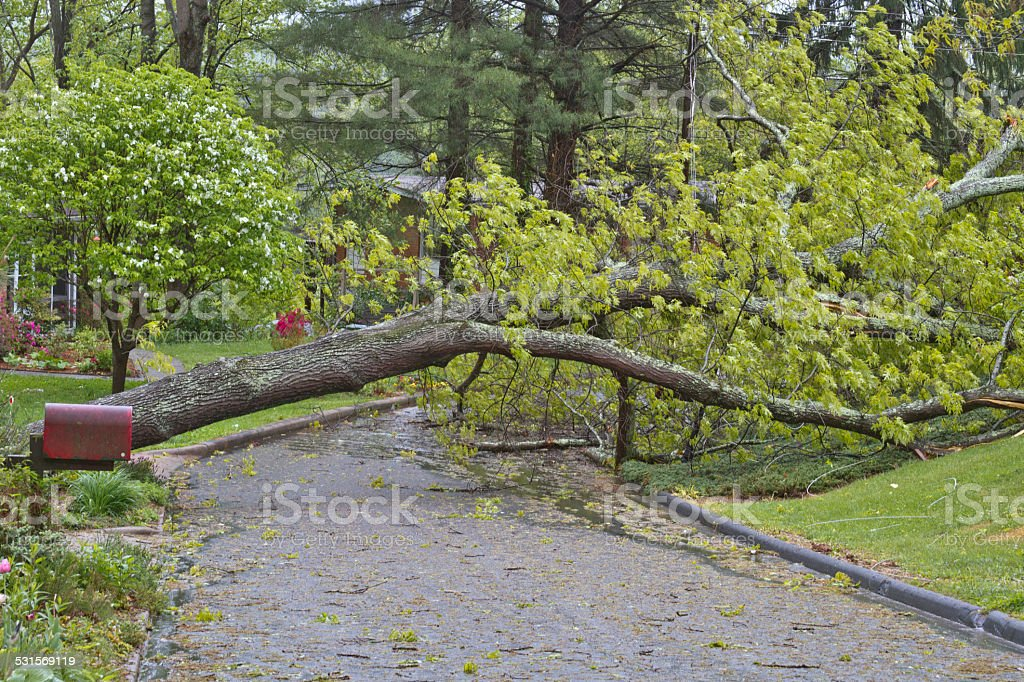 Tree and Power Lines Down On a Road stock photo