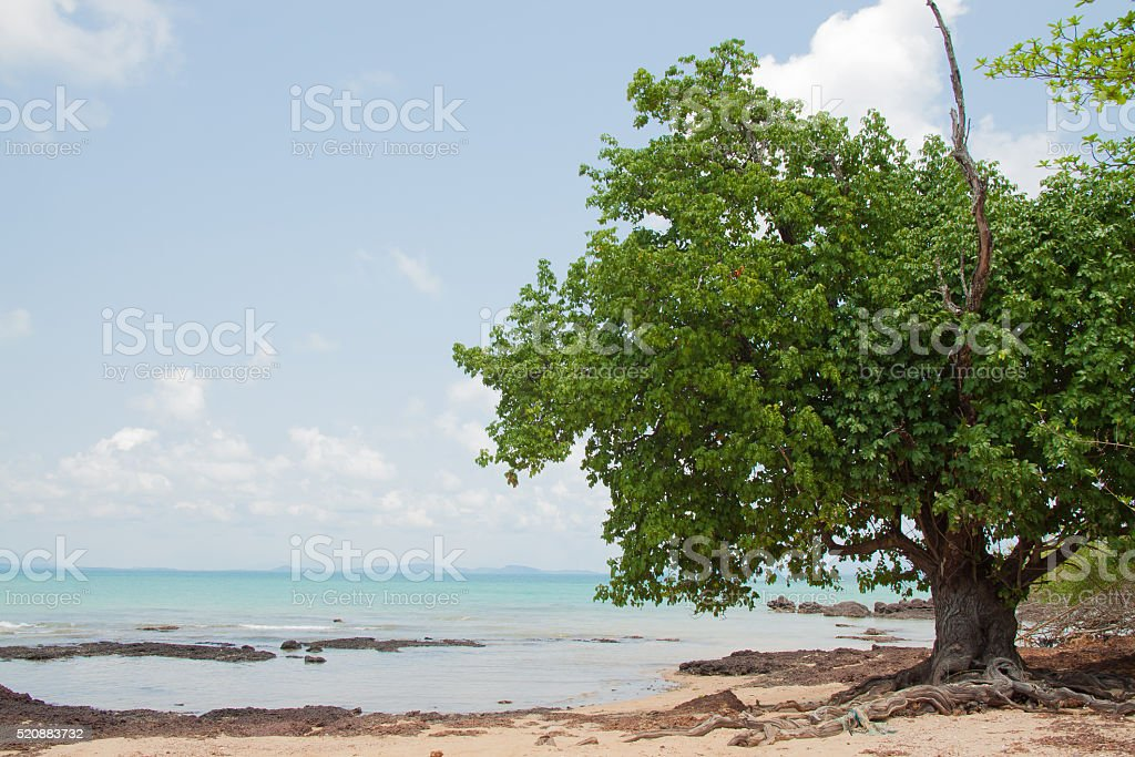 Tree and reef at seaside of island in thailand royalty-free stock photo