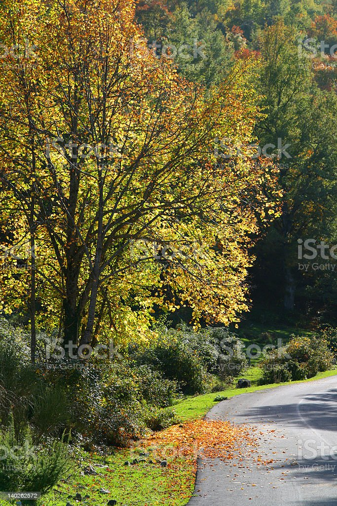 tree and road royalty-free stock photo