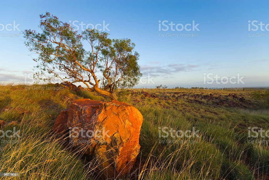 Tree and Rock in Pilbara Outback royalty-free stock photo