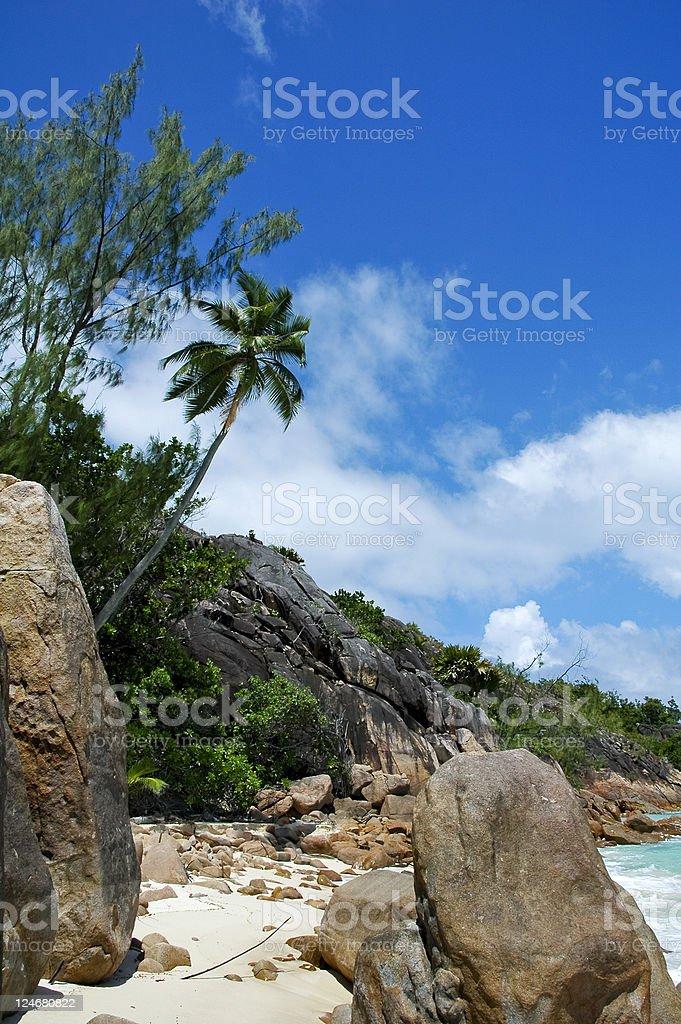 Tree and rock on beach stock photo