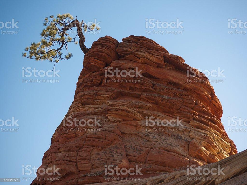 Tree and Rock stock photo