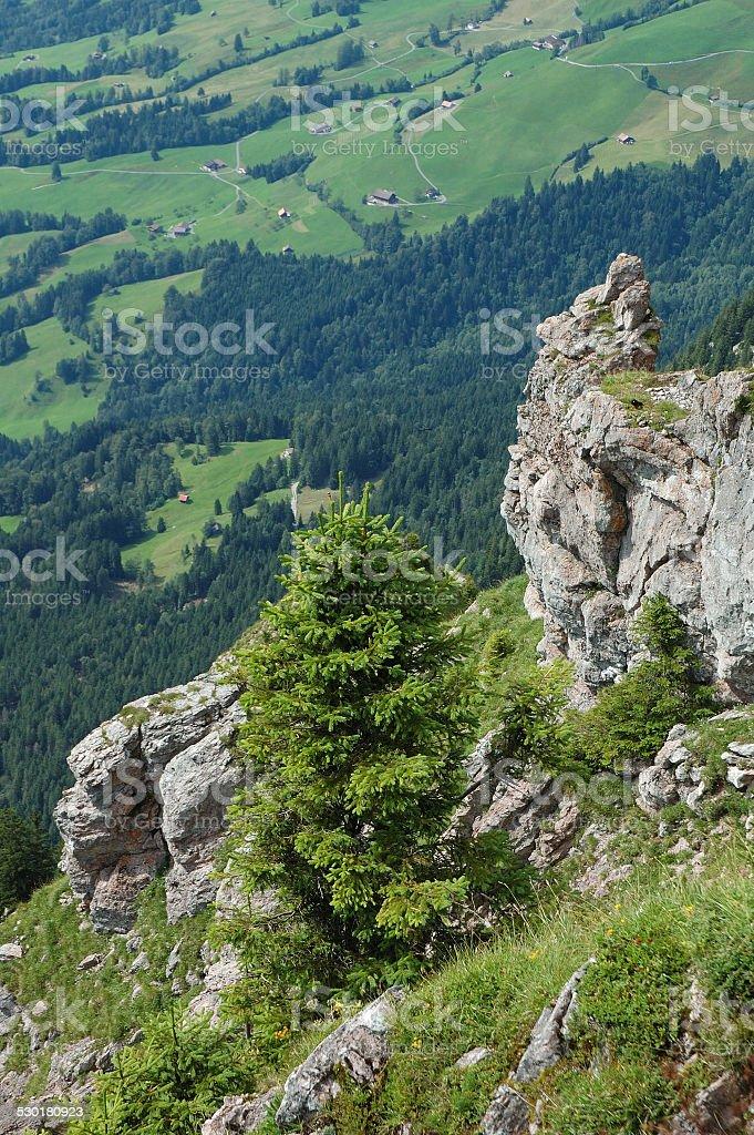 Tree and rocks stock photo