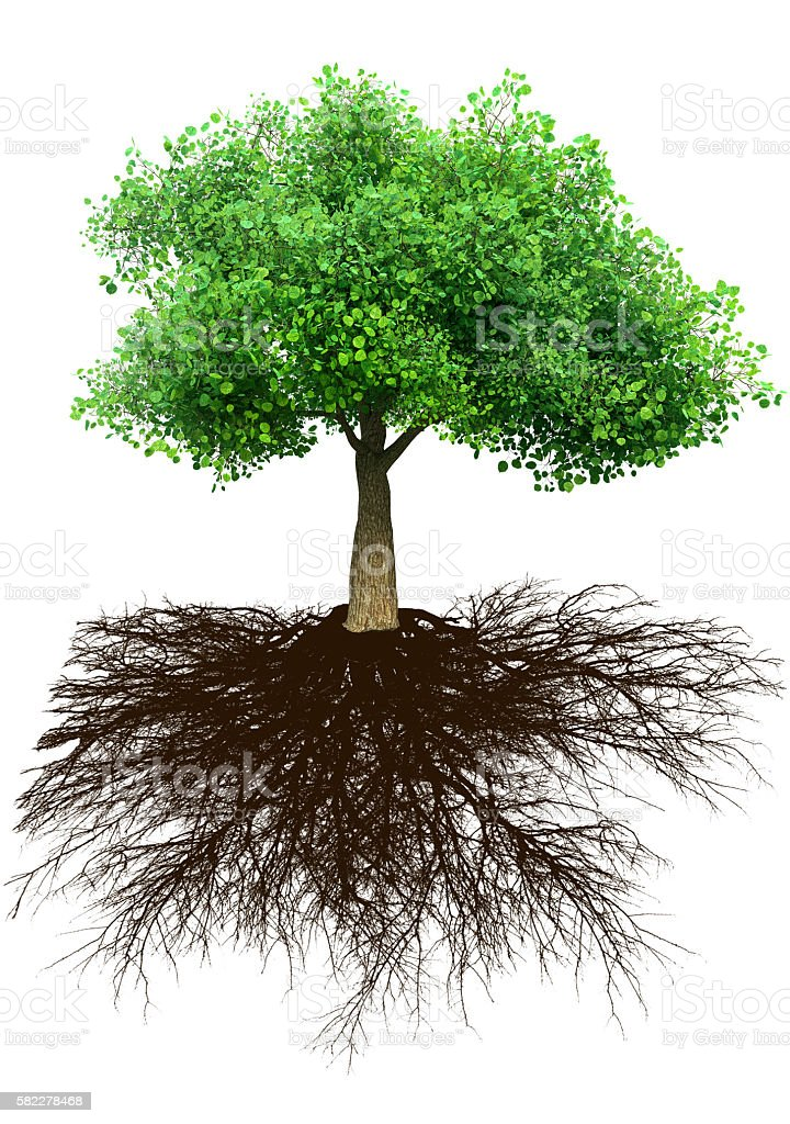tree and roots 3D illustration stock photo