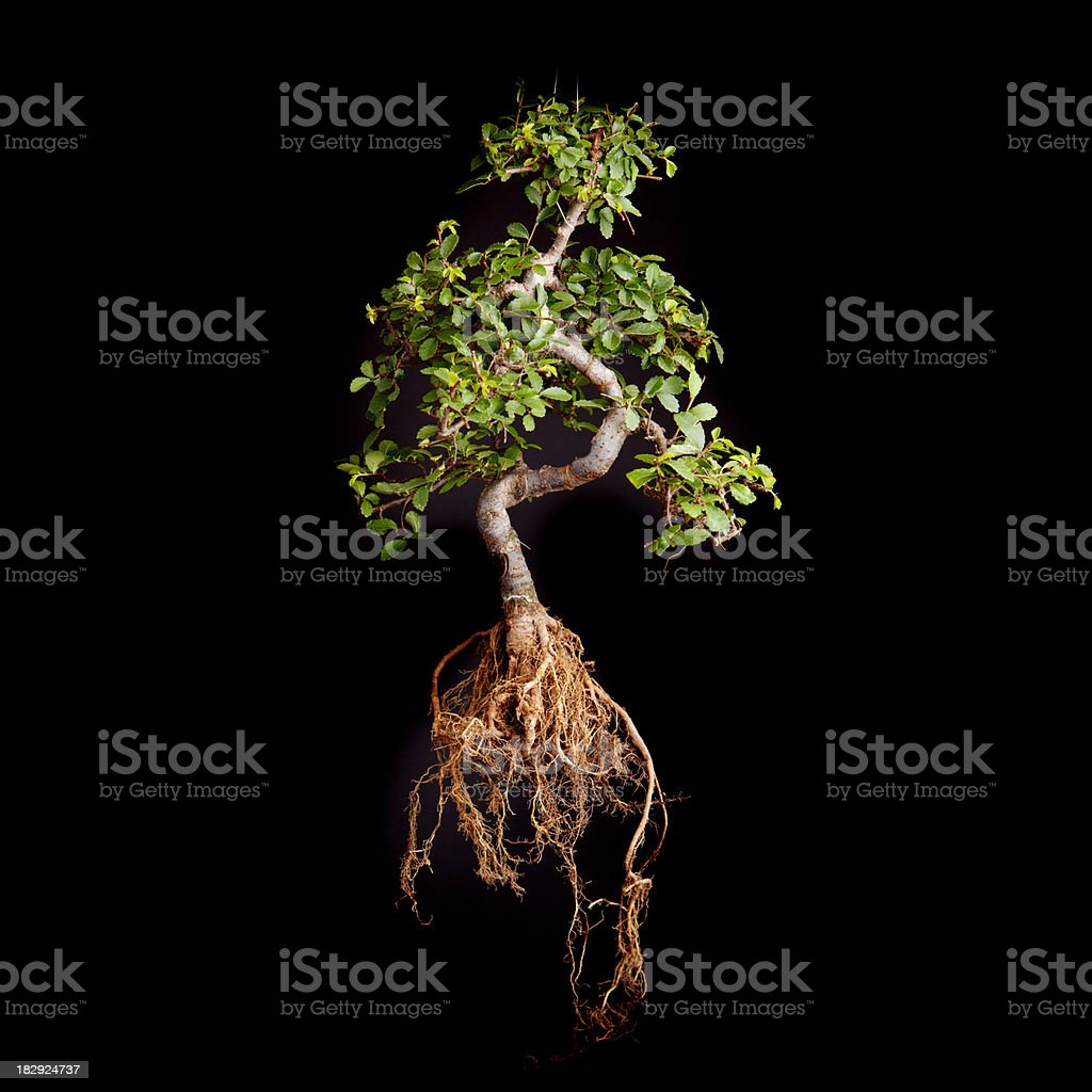 Tree and roots stock photo