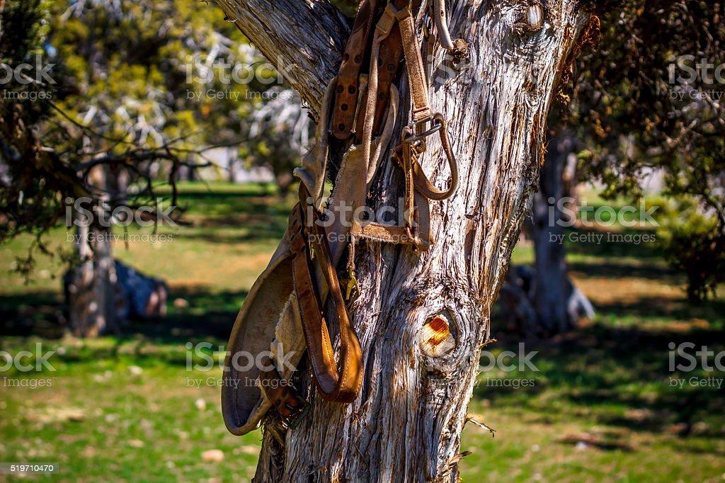 Tree and Saddle stock photo