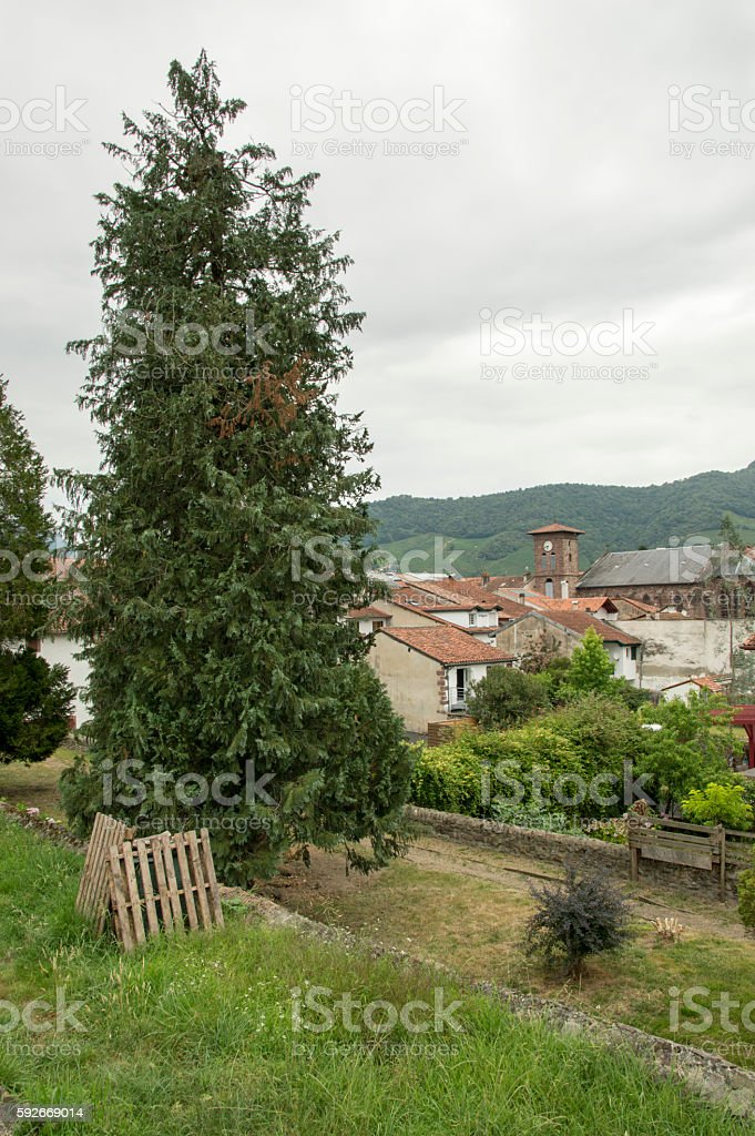 Tree and Saint Jean Pied de Port stock photo