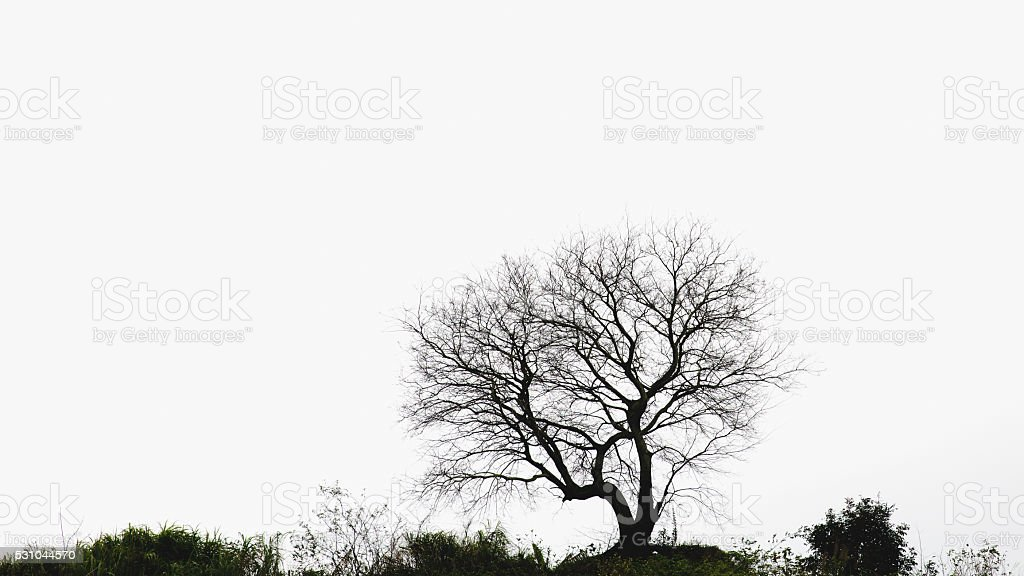 tree and shrubs on horizon stock photo