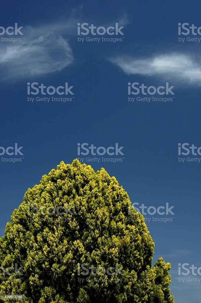 Tree and Sky royalty-free stock photo