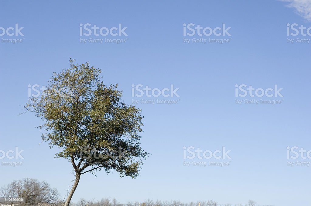 Tree and Sky royalty-free stock photo