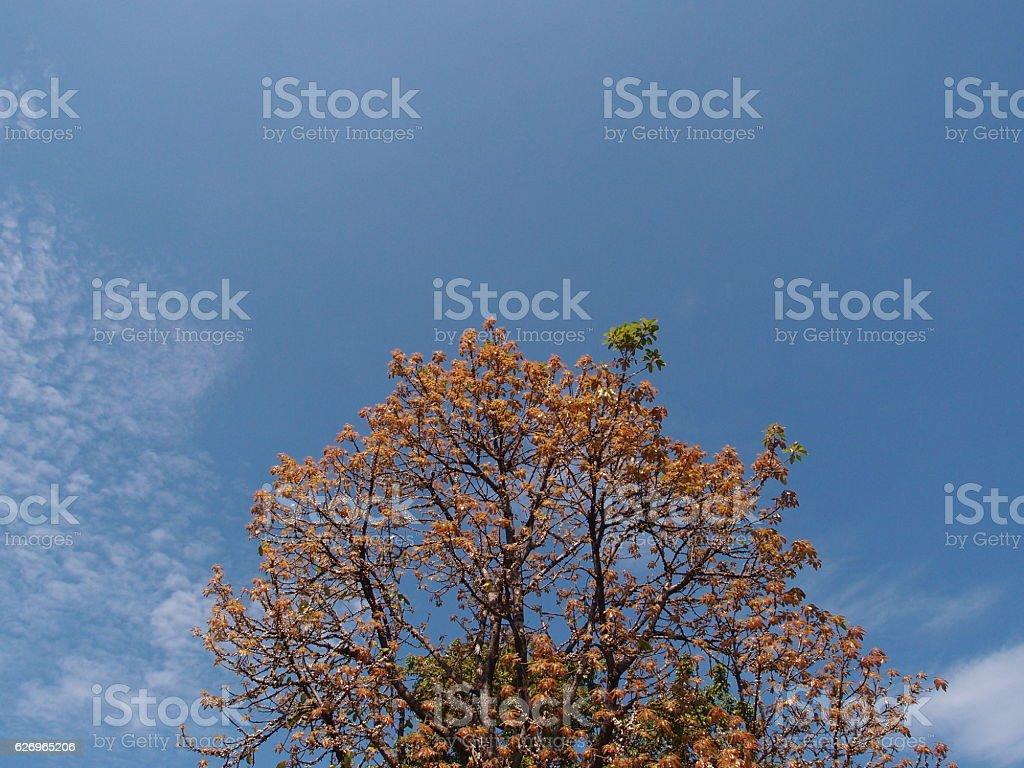 tree and sky stock photo