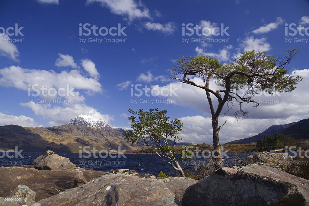 tree and slioch stock photo