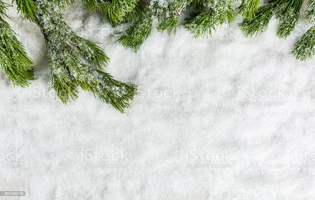 Tree and Snow, Christmas Background, Winter Background stock photo