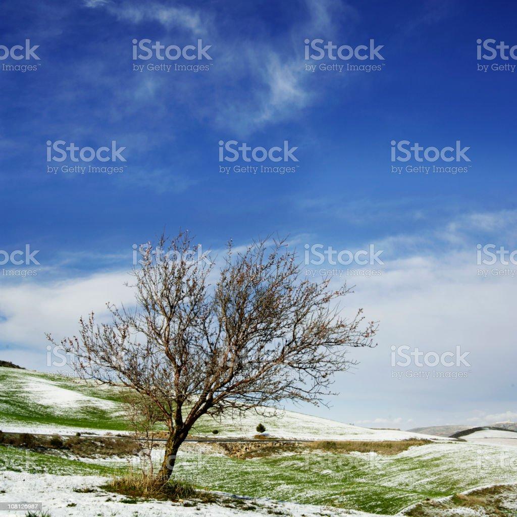 Tree and snow royalty-free stock photo