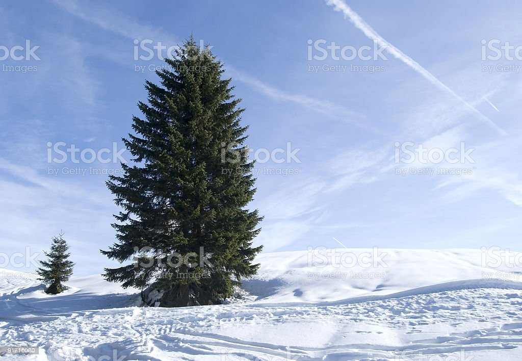 Tree and snow royalty-free stock photo