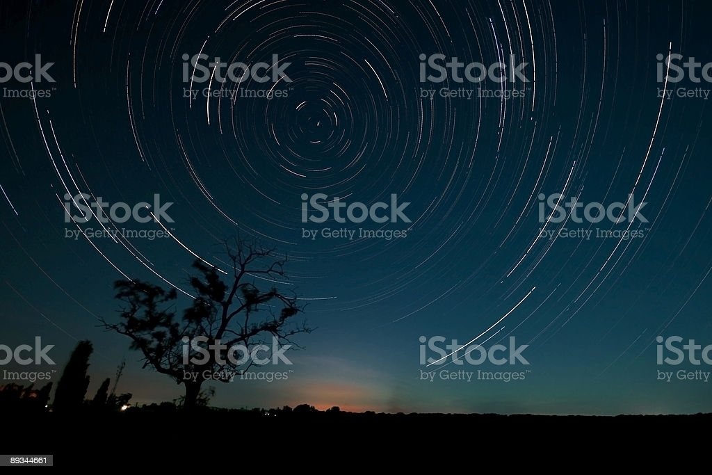 Tree and star trails royalty-free stock photo
