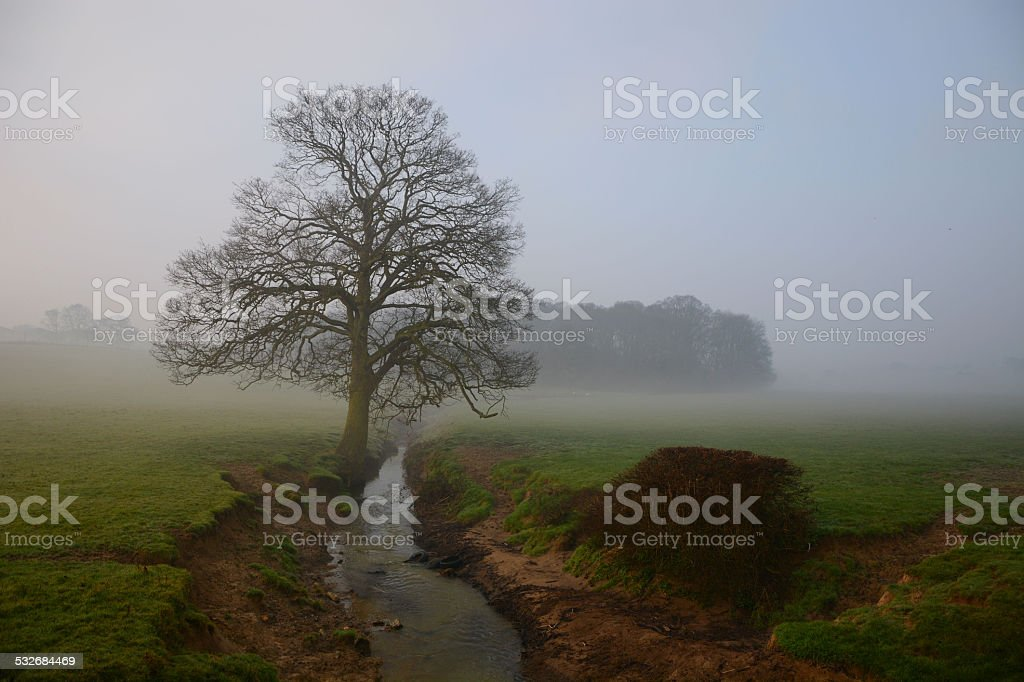 Tree and stream in early morning fog stock photo